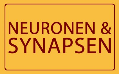 08 – Neuronen & Synapsen